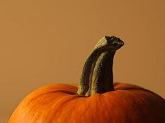 Cheerful Pumpkin by Teo