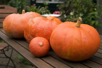 Pumpkins from our garden