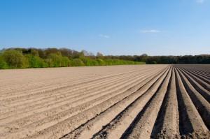 White asparagus fields in Walbeck (Geldern)