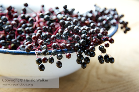 Bowl of fresh elderberries