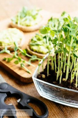 Toast with Fava Bean, Avocado Spread and Pea shoots